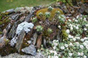 alpines2